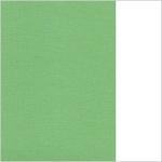 (42) 66.8003.47 Green